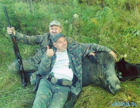 Photo of trophies of hunting for a wild wild boar